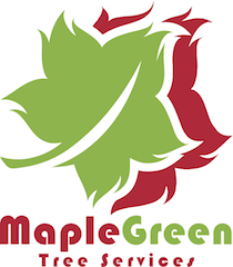 MapleGreen Tree Services